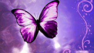 Borboleta Violeta