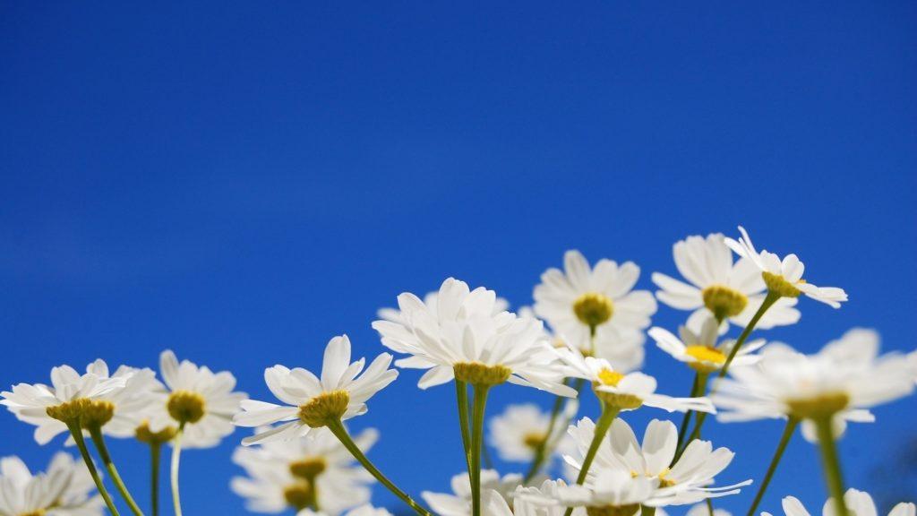 Ceu- azul-flores